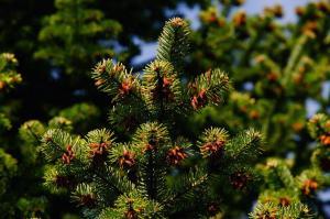 web pine-1388608 1920