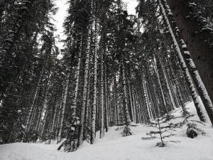 web snow-831566 1920