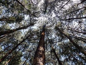 web trees-2128628 1920