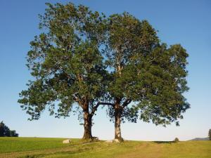 web trees-329314 1920