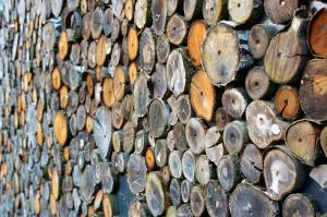 web wood-700245 1920